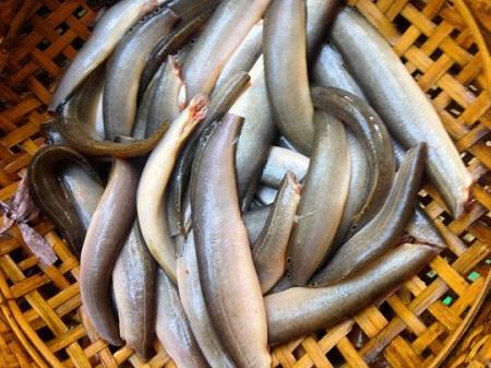Tinh trùng yếu nên ăn gì cho khỏe - Cá chạch