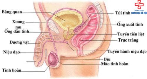 Biểu hiện đau buốt ống dẫn tinh